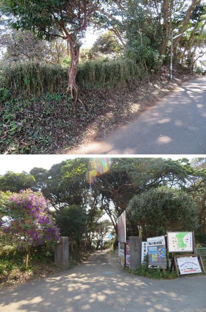 新井城 土塁(三浦市)遊歩道