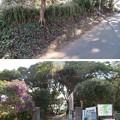 写真: 新井城 土塁(三浦市)遊歩道