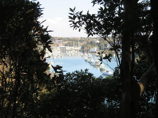 新井城 断崖(三浦市)油壺湾