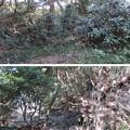 写真: 新井城(三浦市)竪堀?