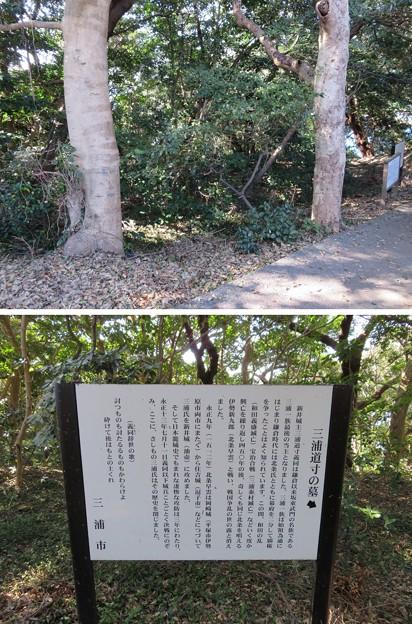新井城(三浦市)郭