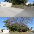 写真: 三崎城(三浦市)二の丸?土塁