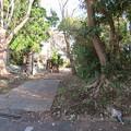 写真: 三崎城(三浦市)土塁・土橋跡