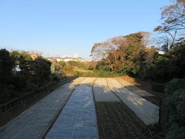 和田城(和田氏館。三浦市)空堀跡