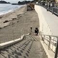 写真: 七里ガ浜(鎌倉市)鎌倉高校駅前