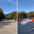 Photos: 鶴岡八幡宮(鎌倉市)参道