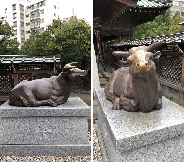 湯島天満宮(文京区)臥牛(撫で牛)