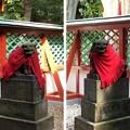 Photos: 山王日枝神社(千代田区永田町)稲荷社・猿田彦社 狛犬