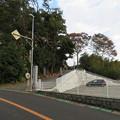 Photos: 米倉寺(神奈川県足柄上郡中井町)参道