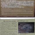城前寺(小田原市)