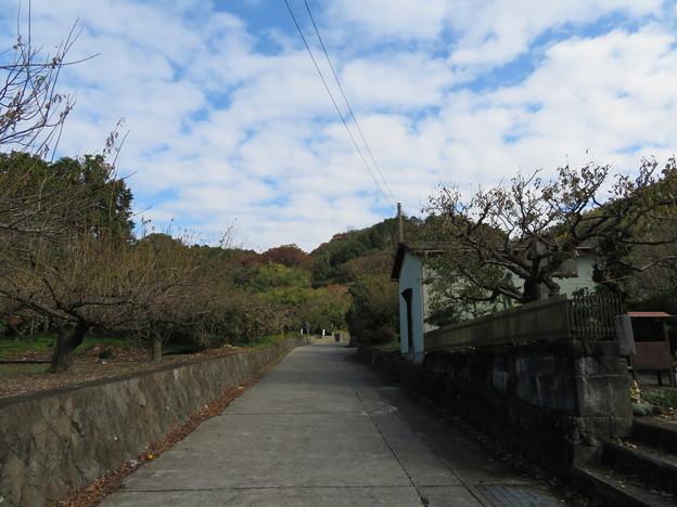 曽我の大山みち(小田原市)