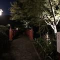 修善寺温泉(伊豆市)竹林の小径