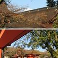 Photos: 富士山本宮浅間大社(富士宮市)富士山