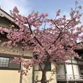 光明寺(鎌倉市)紅梅