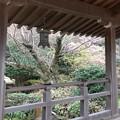 光明寺(鎌倉市)記主庭園