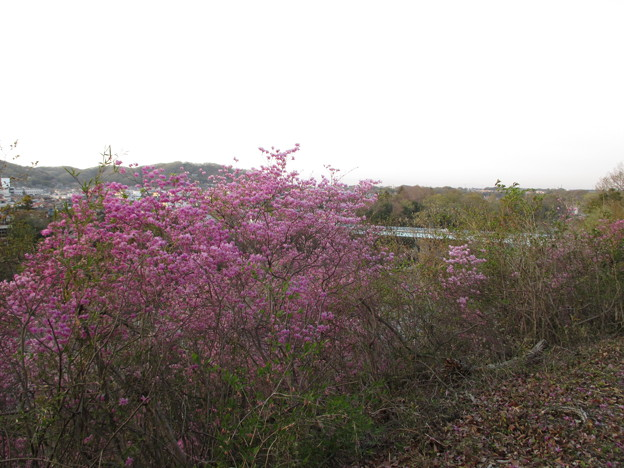 Photos: 14.04.10.鉢形城(鉢形城公園。埼玉県寄居町)