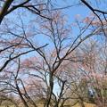 Photos: 19.03.12.菅谷館(嵐山町)南郭