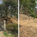 菅谷館木橋(嵐山町)より南