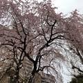 19.03.23.善性寺(東日暮里)