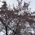 Photos: 19.03.23.善性寺(東日暮里)