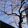 写真: 19.03.24.善性寺(東日暮里)