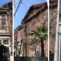 Photos: 西宮邸・旧陸奥宗光邸(根岸)