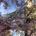 19.04.05.善性寺(東日暮里)