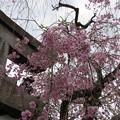 Photos: 19.04.08.雨宝院(上京区)