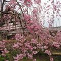 19.04.08.興聖寺(上京区)