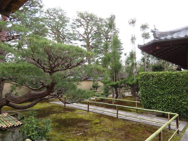 大徳寺塔頭(京都市北区)瑞峯院