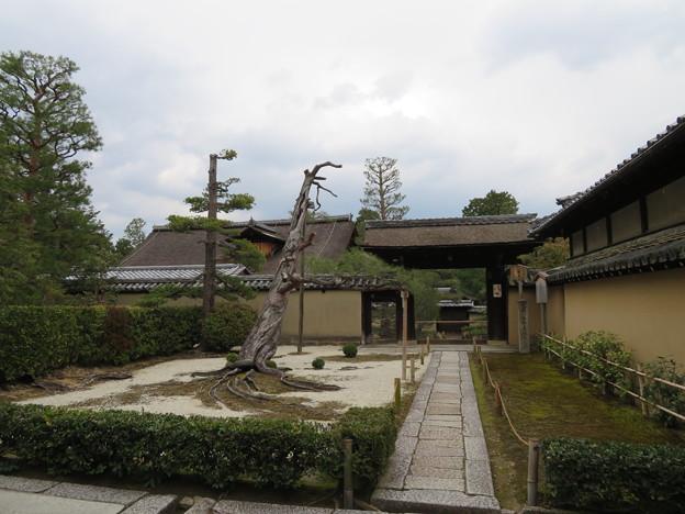 大徳寺(京都市北区)真珠庵