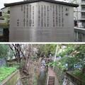 Photos: 15.04.07.戻橋・堀川(上京区)