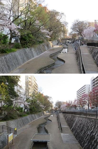 Photos: 19.04.08.戻橋・堀川(上京区)