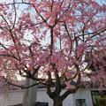 19.04.08.妙顕寺/三好筑前屋敷考察地(上京区)