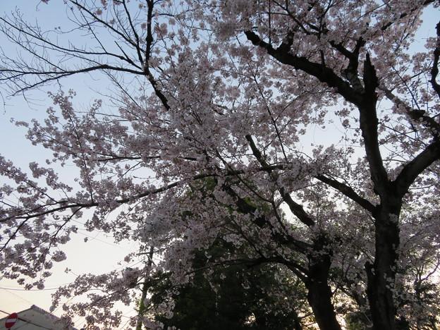 Photos: 19.04.08.応仁の乱激戦地(上京区)