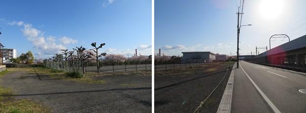 Photos: 伏見街道 淀千両松(千両松の戦い古戦場)考察地(伏見区)