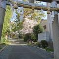 Photos: 19.04.09.神足神社(勝竜寺城 神足屋敷。長岡京市)