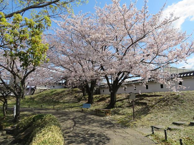 19.04.09.勝竜寺城本丸(長岡京市)
