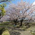 Photos: 19.04.09.勝竜寺城本丸(長岡京市)