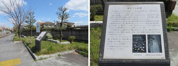 長岡天満宮前(長岡京市)おとくにの竹