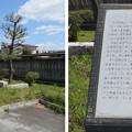 Photos: 長岡天満宮前(長岡京市)おとくにの竹