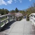 Photos: 19.04.09.長岡天満宮(長岡京市)八条ヶ池