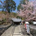 Photos: 19.04.09.宝積寺(乙訓郡大山崎町)