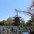 Photos: 宝積寺(乙訓郡大山崎町)三重塔