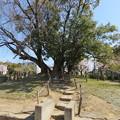 Photos: 19.04.09.阿弖流為・母禮の塚(枚方市営 牧野公園)