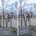 Photos: 19.04.09.越中公園/細川越中守屋敷跡(大阪市中央区)