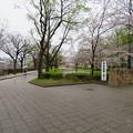 Photos: 19.04.10.大坂城(大阪府大阪市中央区)三の丸?