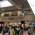 大宮駅東西連絡通路(さいたま市)まめの木
