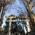Photos: 葛西神社(葛飾区)境内鳥居