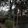 Photos: 葛西城(葛飾区青戸)葛西城址公園